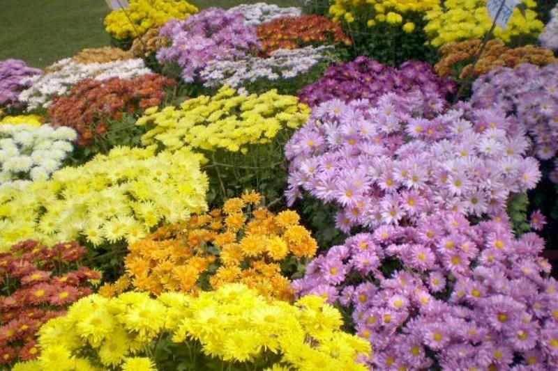 फूल प्रदर्शनीमा रु ३३ लाखको कारोवार